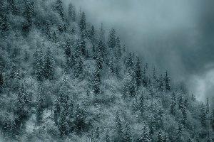 Winter, Bäume, Schnee