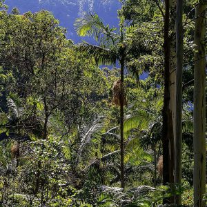 Australien, Regenwald