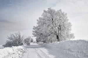 Baum und Schnee