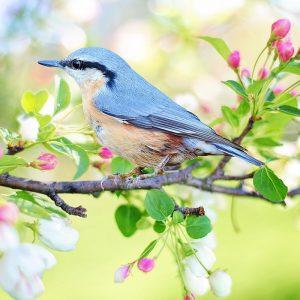 Frühling, Vogel