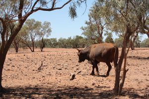 Outback, Australien