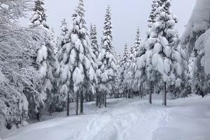 Das Gewicht von Schnee - Inhalt, Rezension, Buchkritik